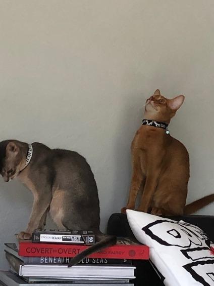 Bebe kittens in new home