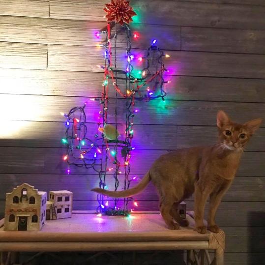 GrapeArbor boy enjoying Christmas tree