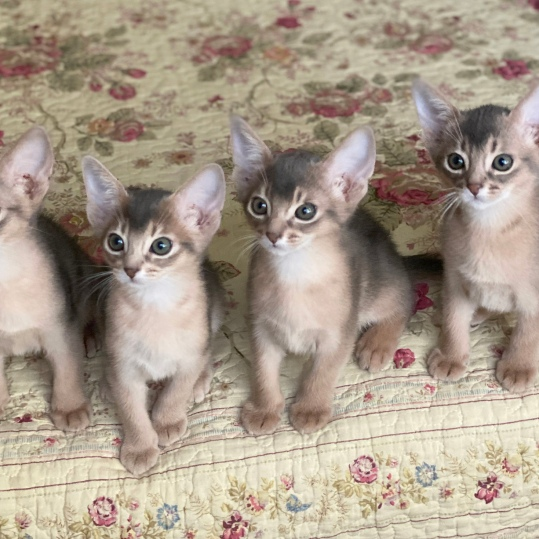 MaybeBaby kittens