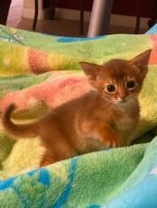 Fantasy's singleton kitten