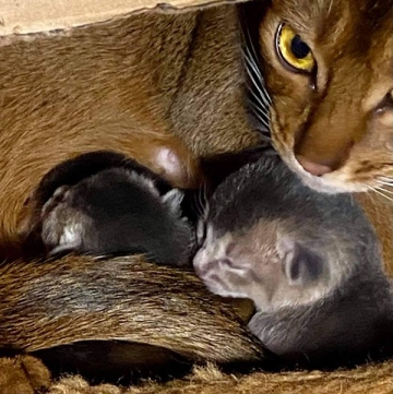 Joie and her kittens